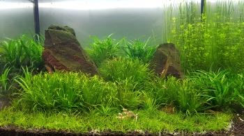 Poza acvariu
